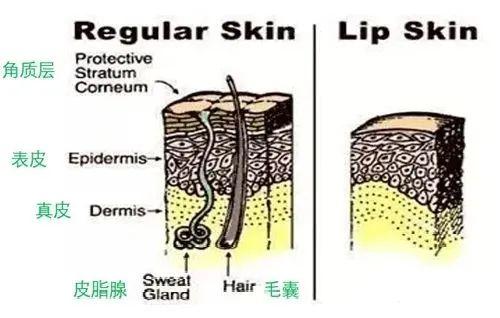 纹唇后不肿胀是因为巧妙的做对了这一点 半永久培训 第3张